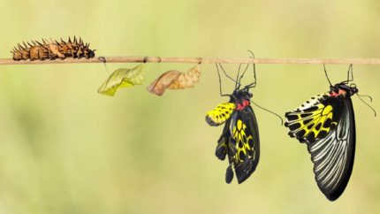 Transformative butterfly