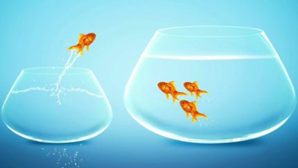 wonkhe-crossing-tribes-fish