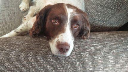 wonkhe-suspicious-dog