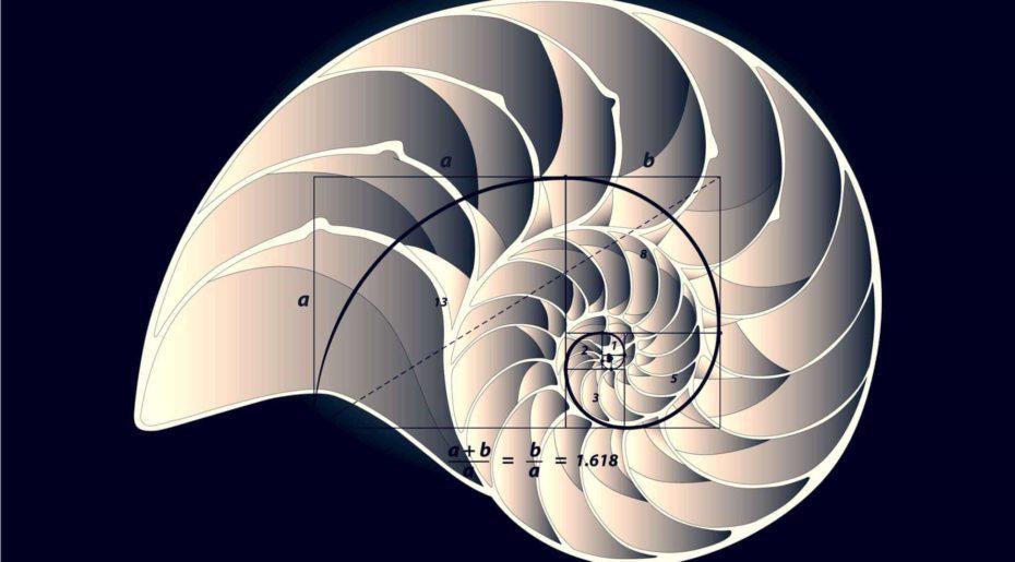 Wonkhe golden ratio shell