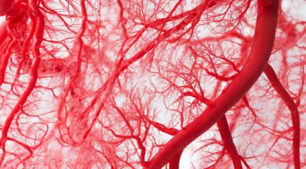 wonkhe-heart-system