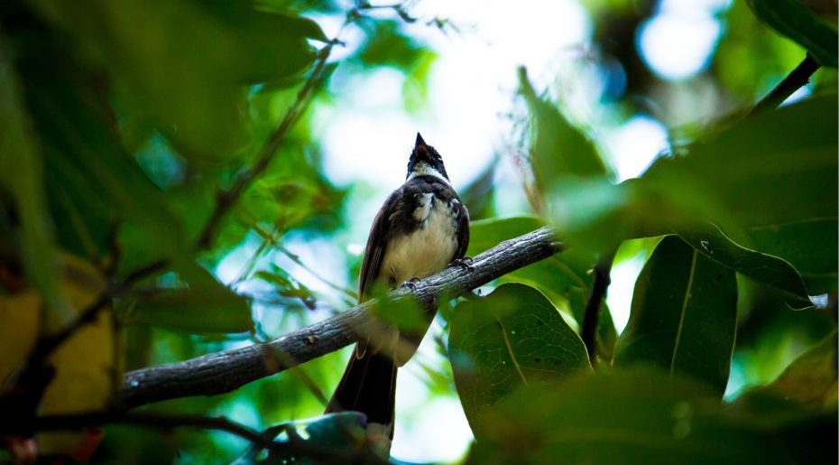 wonkhe-bird