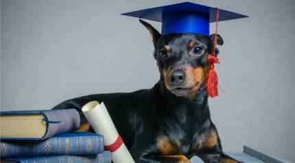 wonkhe-dog-graduation