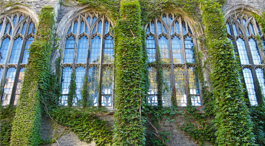wonkhe-ivy-league-windows