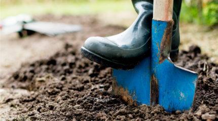 Wonkhe digging spade