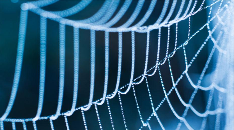 wonkhe-web-spider