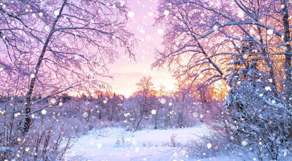 wonkhe-winter