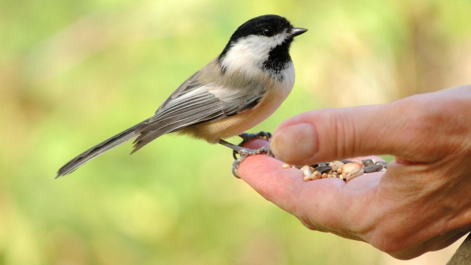 Wonkhe bird in the hand