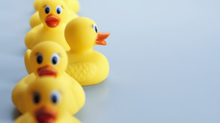 Wonkhe ducks