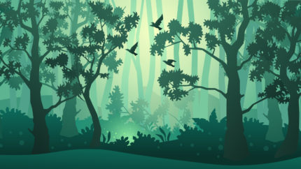 wonkhe-trees-forest