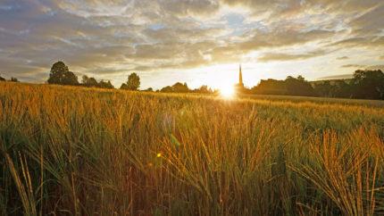 wonkhe-sunrise-harvest