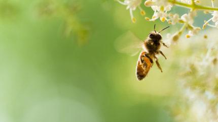 Wonkhe bee